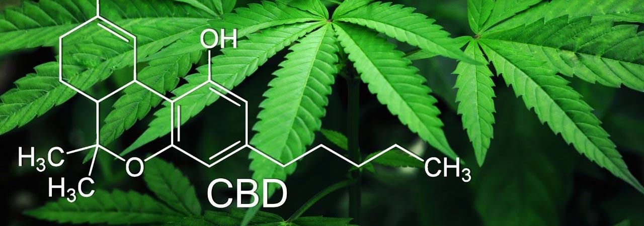 marijuana legale ad alto contenuto di CBD