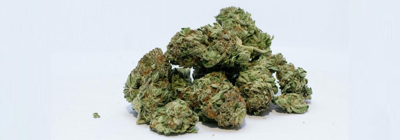 infiorescenze di cannabis light